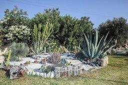 Территория. Кипр, Мазотос : Роскошная вилла с большим бассейном и зеленой территорией, 4 спальни, 5 ванных комнат, джакузи, домашний кинотеатр, кабинет, барбекю, детская площадка, парковка, Wi-Fi