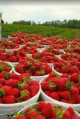 Strawberry and Fruits stall в Айос Теодоросе