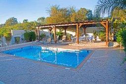 Бассейн. Кипр, Нисси Бич : Прекрасная вилла с бассейном и зеленым двориком, 3 спальни, 2 ванные комнаты, парковка, Wi-Fi