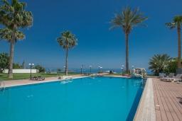 Бассейн. Кипр, Фиг Три Бэй Протарас : Апартамент с гостиной, отдельной спальней и балконом с потрясающим видом на Средиземное море, расположен в комплексе с бассейном в центре Протараса, всего в нескольких метрах от знаменитого пляжа Fig Tree Bay