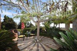 Территория. Кипр, Центр Айя Напы : Уютная вилла с зеленым двориком и барбекю, 3 спальни, 3 ванные комнаты, парковка, Wi-Fi