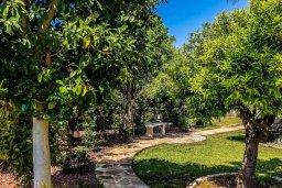 Территория. Кипр, Аргака : Роскошная вилла с бассейном и зеленым двориком с барбекю, 5 спален, 5 ванных комнат, сауна, парковка, Wi-Fi
