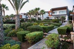 Территория. Кипр, Айос Тихонас Лимассол : Роскошная вилла с бассейном в 20 метрах от пляжа, 4 спальни, 4 ванные комнаты, сауна, парковка, Wi-Fi
