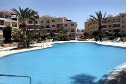 Бассейн. Кипр, Пафос город : Прекрасный апартамент с видом на Средиземное море, с 2-мя спальнями, с 2-мя ванными комнатами, расположен в комплексе с бассейном всего в 400 метрах от моря