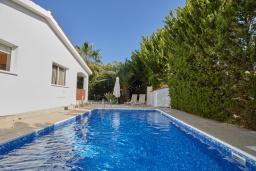 Бассейн. Кипр, Корал Бэй : Прекрасное бунгало с 2-мя спальнями, с бассейном, в окружении пышного зелёного сада, тенистой террасой с патио и барбекю, расположено около пляжа Corallia Bay Beach