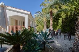 Зелёный сад. Кипр, Корал Бэй : Прекрасное бунгало с 2-мя спальнями, с бассейном, в окружении пышного зелёного сада, тенистой террасой с патио и барбекю, расположено около пляжа Corallia Bay Beach