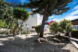 Территория. Кипр, Нисси Бич : Прекрасная вилла с 4-мя спальнями, с большим бассейном, солнечной террасой с патио и барбекю