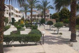 Территория. Кипр, Пафос город : Апартамент в комплексе с большим бассейном, с гостиной, отдельной спальней и террасой