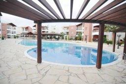 Бассейн. Кипр, Пафос город : Уютная студия в комплексе с бассейном