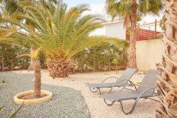 Территория. Кипр, Корал Бэй : Прекрасная вилла с бассейном и зеленым двориком, 3 спальни, 2 ванные комнаты, барбекю, парковка, Wi-Fi