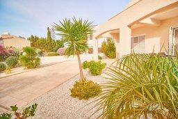 Территория. Кипр, Корал Бэй : Прекрасная вилла с бассейном и зеленым двориком с барбекю, 4 спальни, 2 ванные комнаты, джакузи, парковка, Wi-Fi